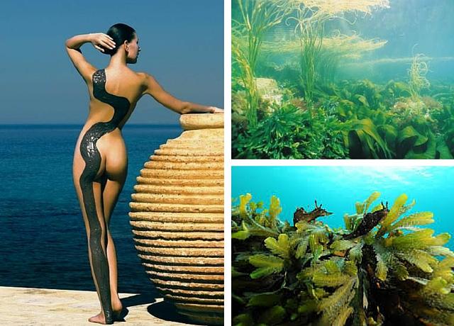 La cosmetique marine puise ses actifs grâce aux algue marines!