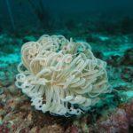 Fond marin en danger mais protégé par les actions des fondations!